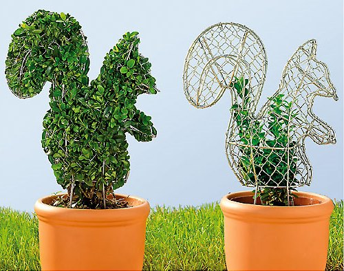 декоративная стрижка кустарников